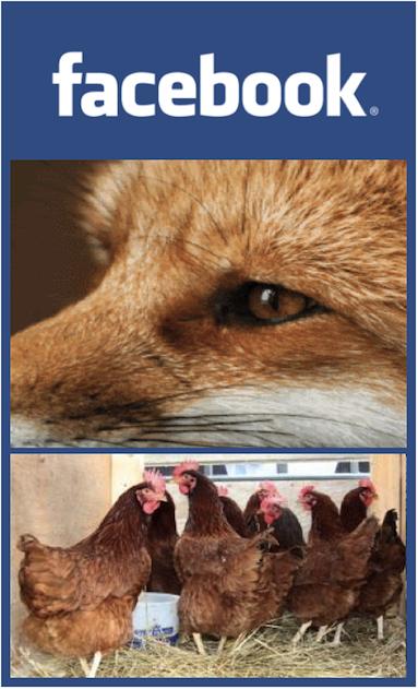 Facebook-Fox