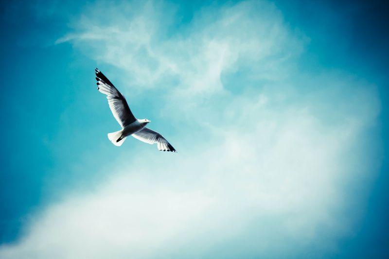 Bird-Aloft