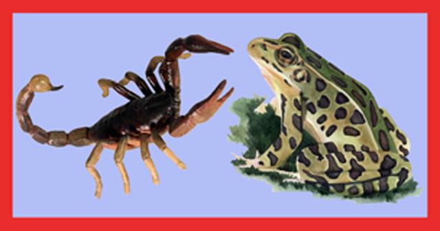 Scorpionfrog